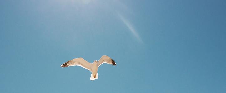 晴れた日の鳥イメージ