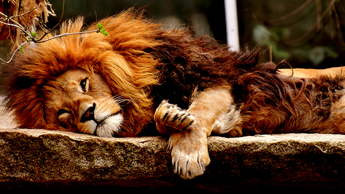 円山動物園のイメージ