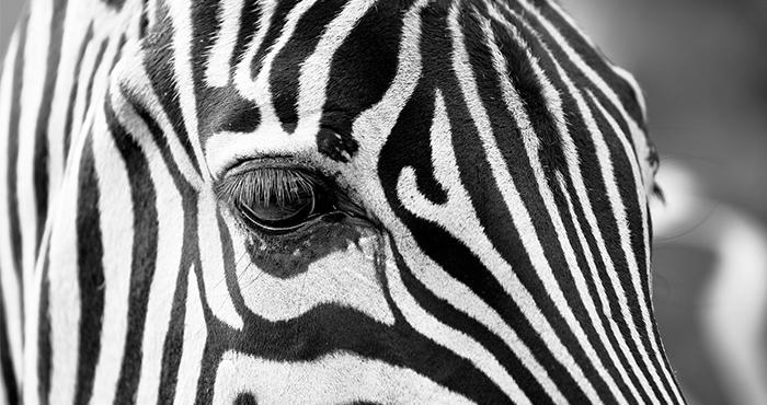 円山動物園、涙の人工知能(AI)導入の理由イメージ