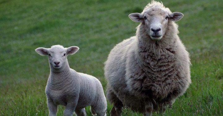 羊のイメージ