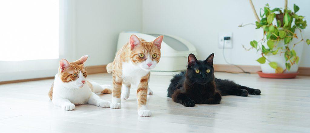 トレッタと猫のイメージ