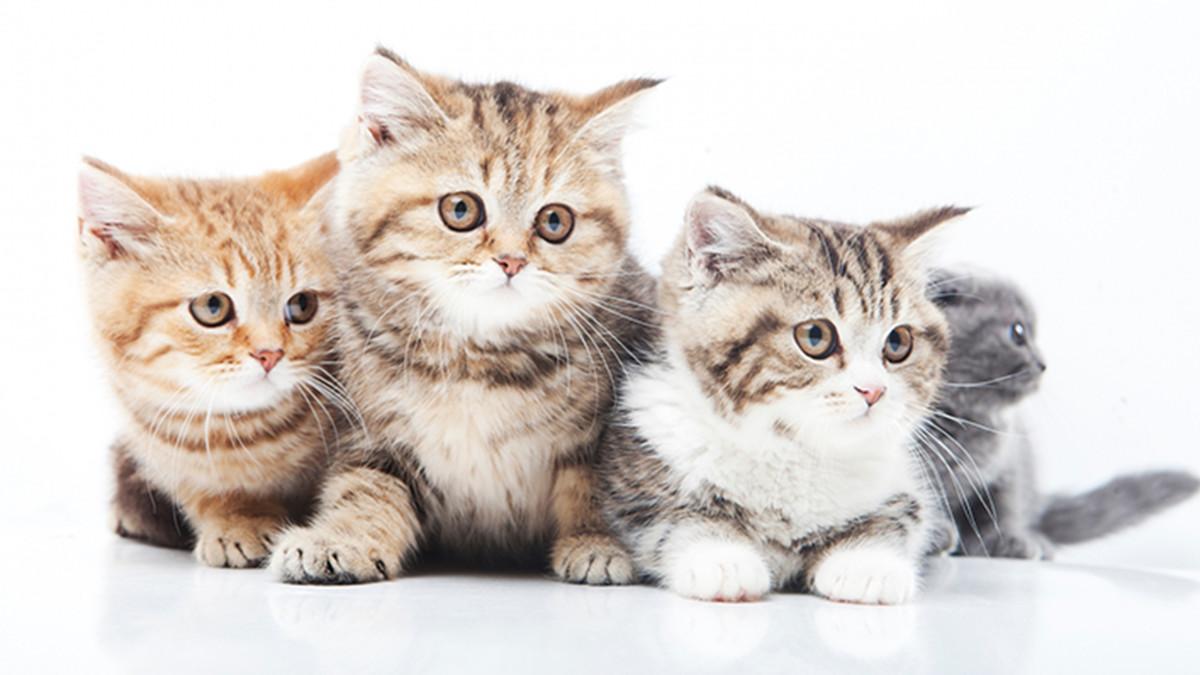 猫の判別もできる!ディープラーニングの身近な活用例3つ