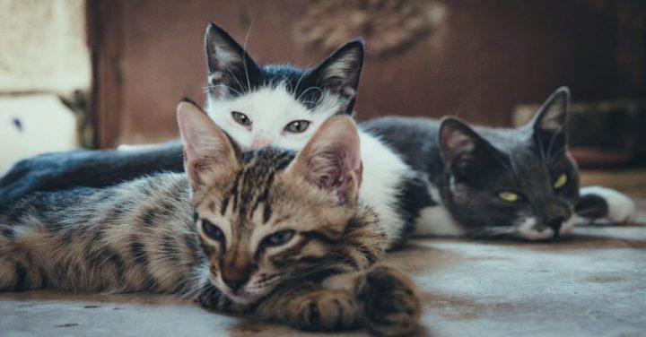 猫3匹のイメージ