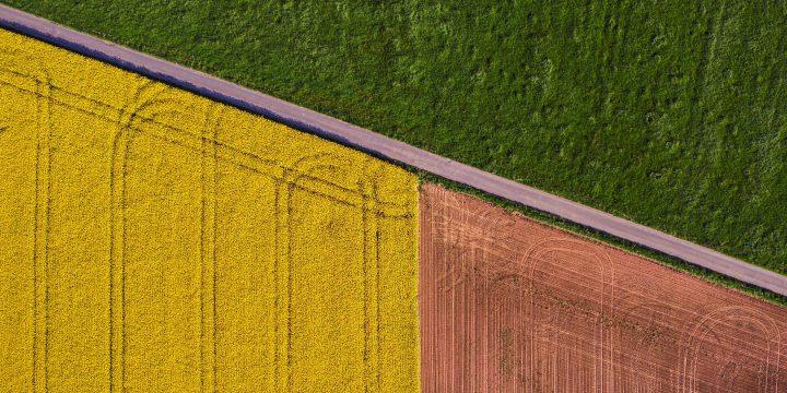 鮮やかな農園