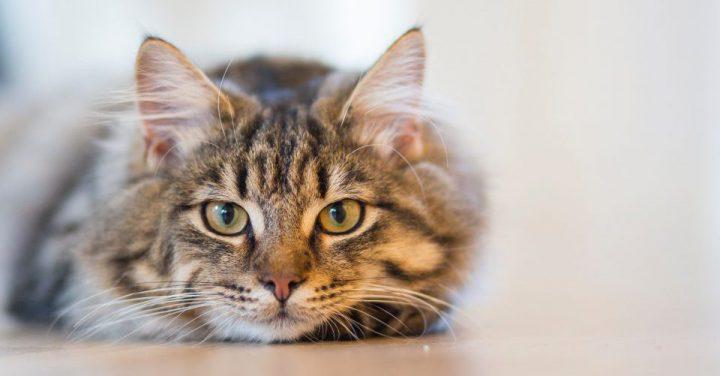 例えの猫のイメージ