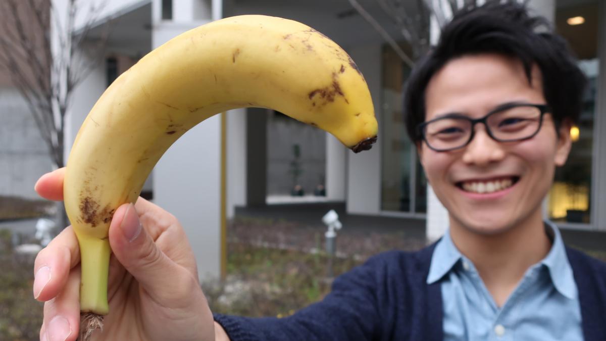 バナナの曲線を見ているつっちーの様子