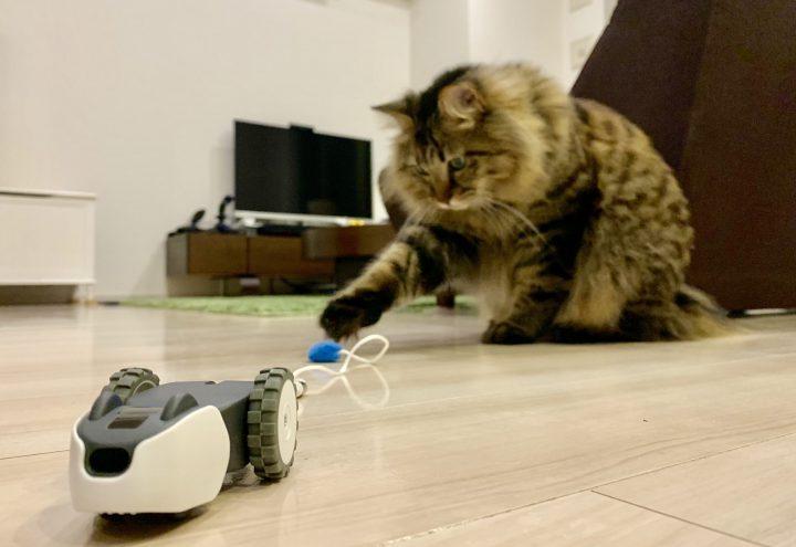 mousrをつつく猫