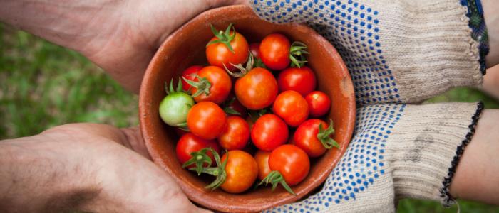 農家から消費者へ野菜が供給されていくイメージ