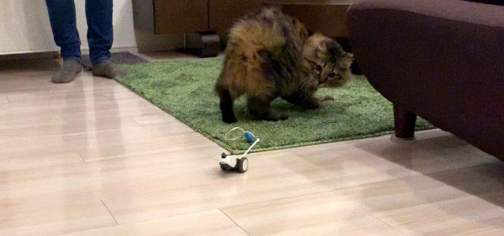 mousrと遊ぶ猫8