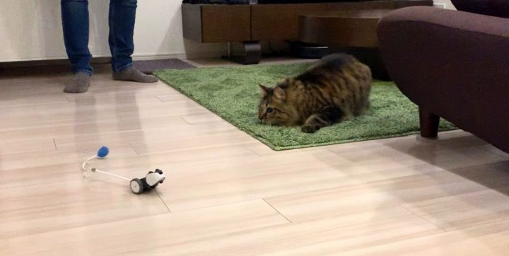 mousrと遊ぶ猫9