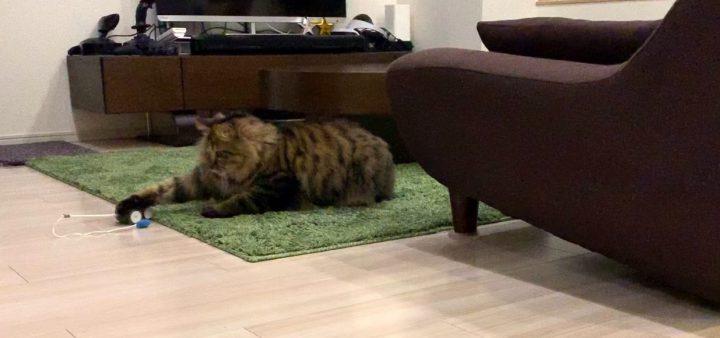 mousrと遊ぶ猫10