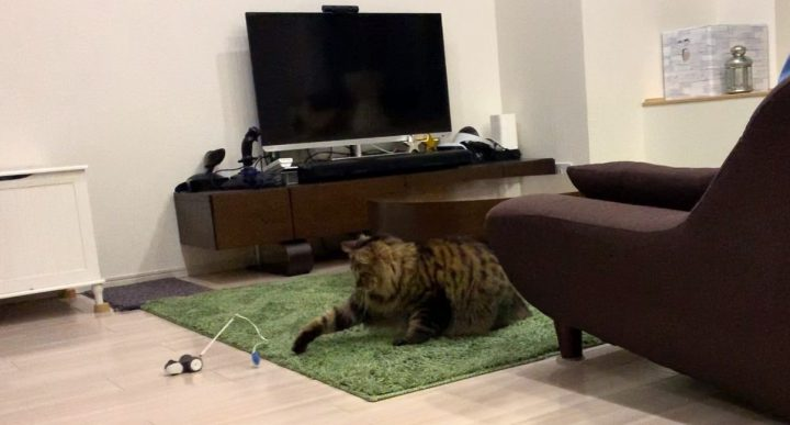 mousrと遊ぶ猫11