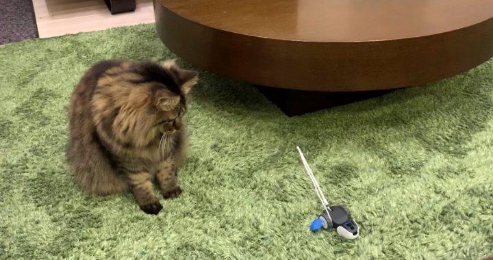 mousrと遊ぶ猫12