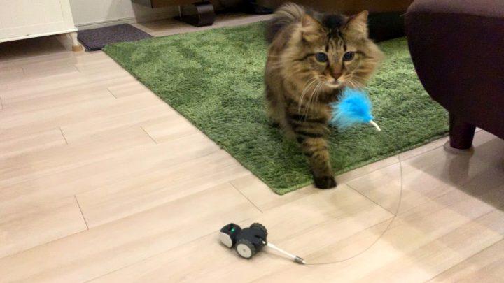 mousrと遊ぶ猫2