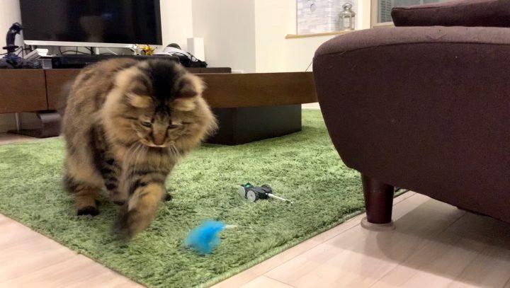 mousrと遊ぶ猫3