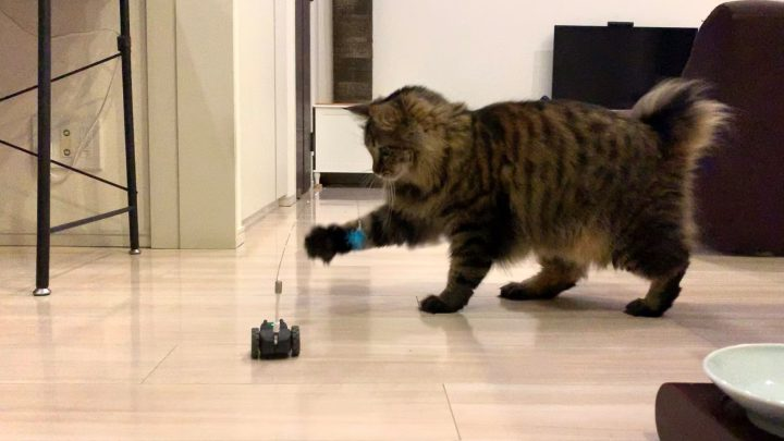 mousrと遊ぶ猫4