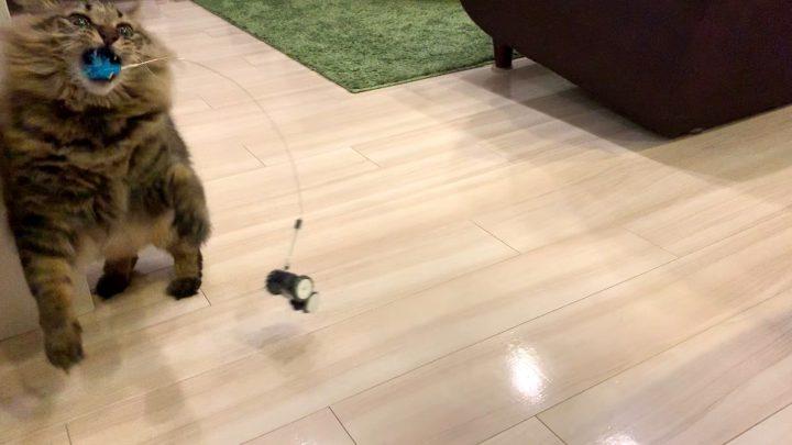 mousrと遊ぶ猫5