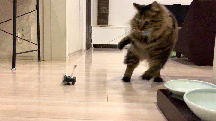 mousrと遊ぶ猫6