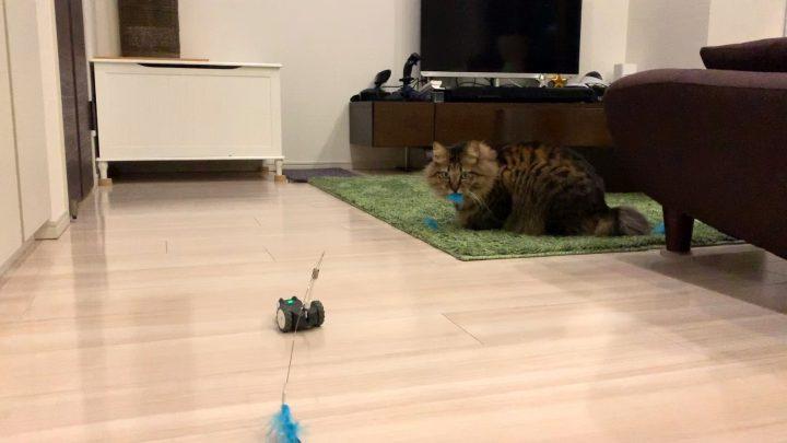 mousrと遊ぶ猫7