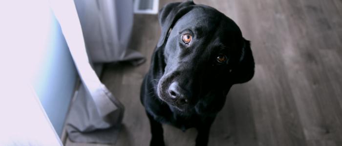 疑問を抱いている犬のイメージ