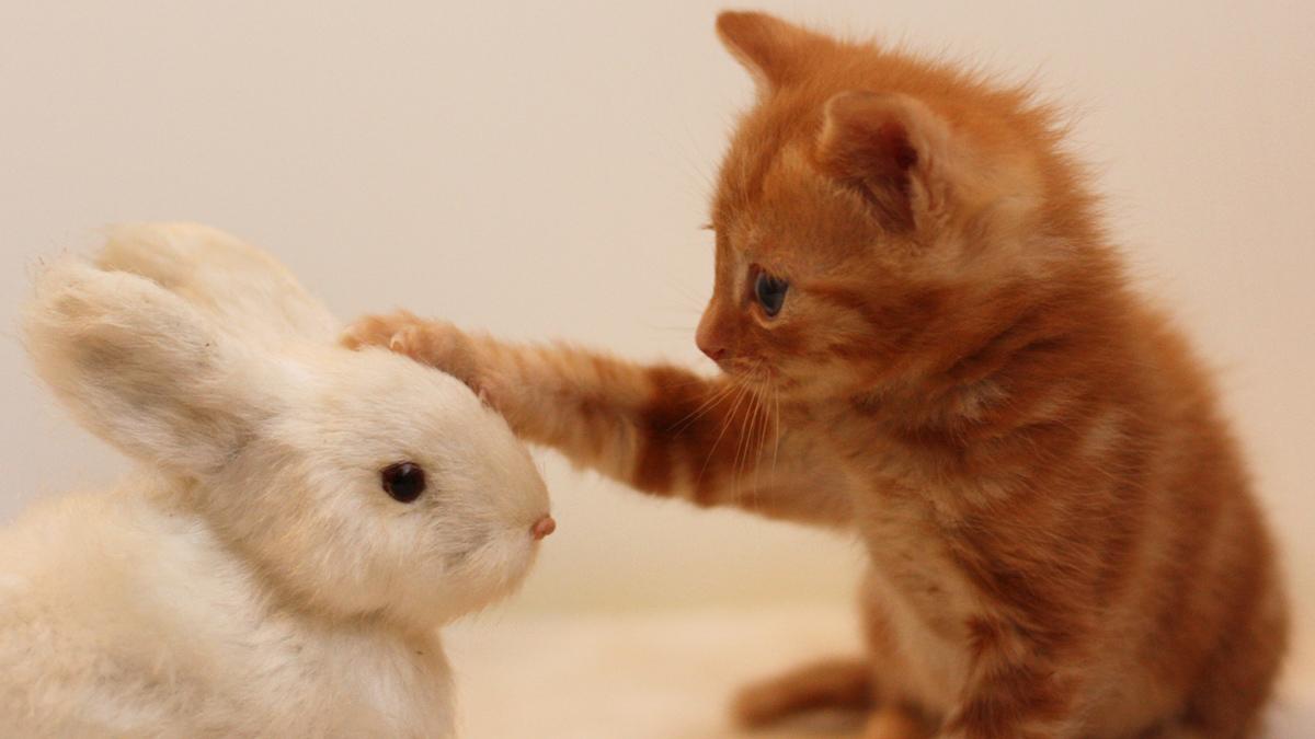 ペットの代わりに一家に一台!動物型ロボットで癒やされよう