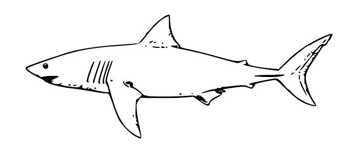サメ(模範)