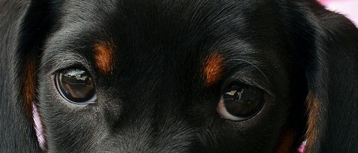 aiboみたいな犬の目のイメージ