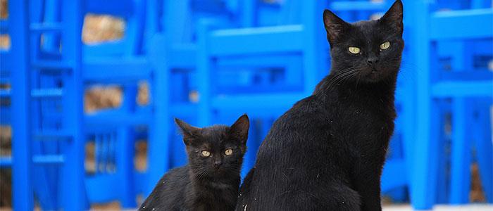 黒猫のイメージ