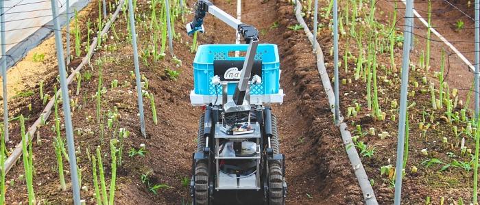 自動野菜収穫ロボットのイメージ