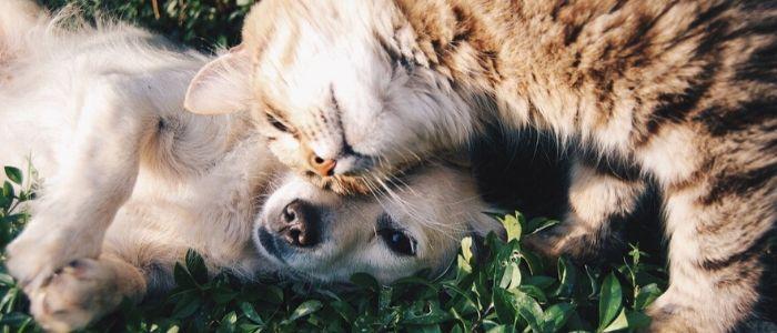 犬猫のイメージ