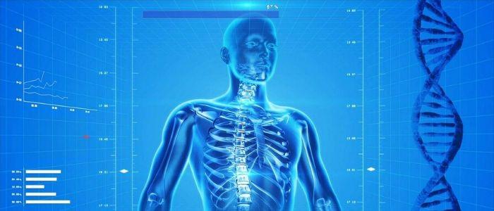 骨格測定のイメージ