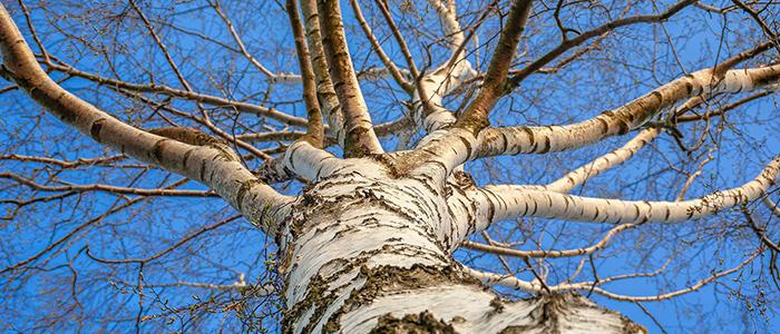 決定木のイメージ