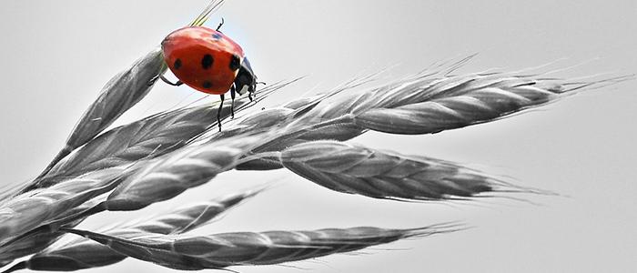 農業に人工知能のまとめのイメージ