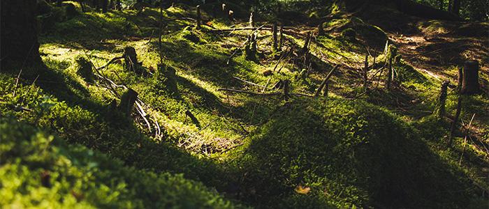 森林伐採のイメージ