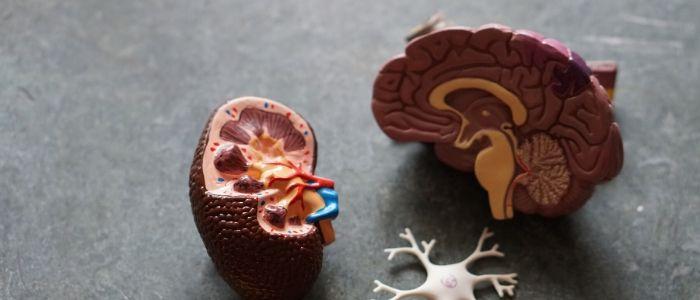 ニューロンのイメージ