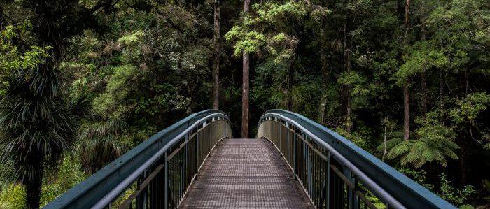forestに入っていくイメージ
