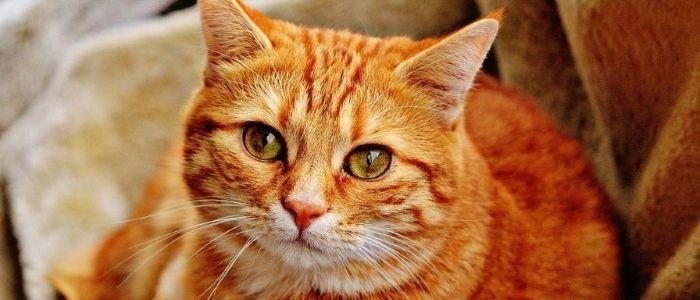 猫のイメージ