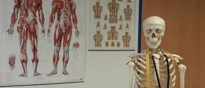 骨のイメージ